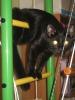 Наш кот-ЧЕРНИКА!_2
