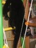 Наш кот-ЧЕРНИКА!_3